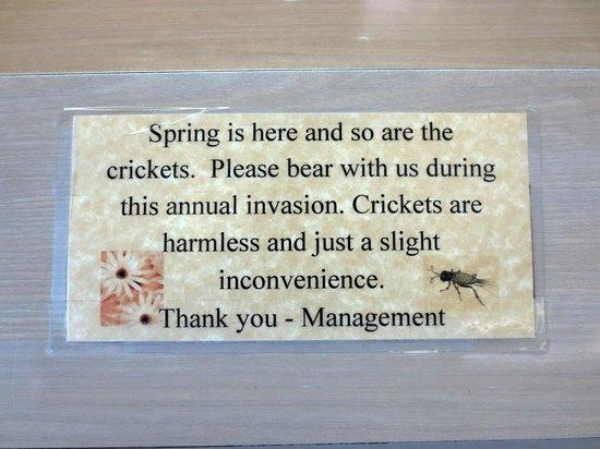 Motel 6 Beatty / Death Valley: Crickets