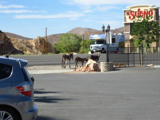 Motel 6 Beatty / Death Valley: Parkeerplaats hotel