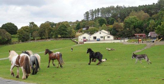Muckross Riding Stables B&B: Grounds