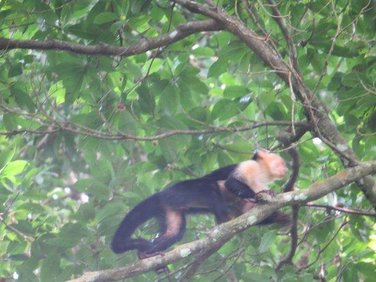 Jaco Canopy Tour: Zip Line Monkey