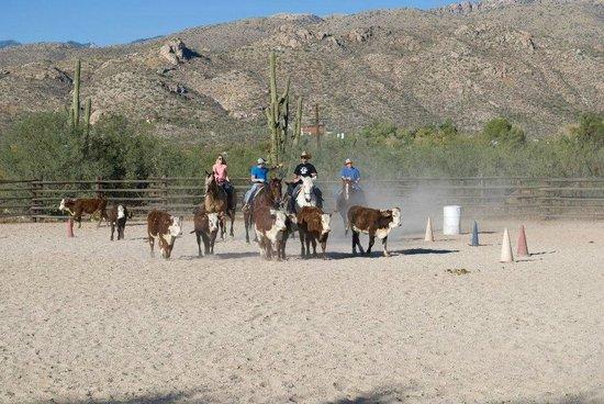 Tanque Verde Ranch: Team Penning