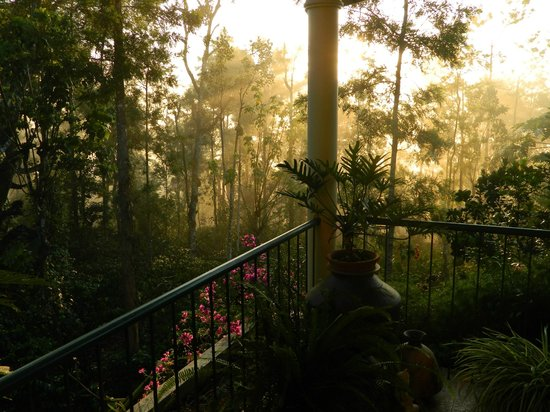 Coorg Berry Lane: view from balcony