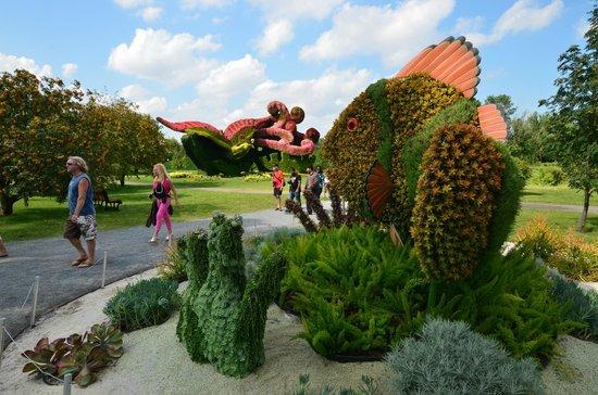 Beautiful Montreal Botanical Gardens: Small Clownfish And Anemone + Phoenix