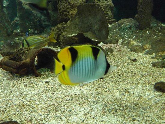 Île de Noirmoutier, France : Aquarium