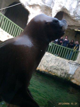 Île de Noirmoutier, France : Sea lion show