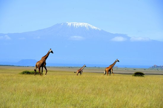 Amboseli Eco-system, Kenya: Game drive!