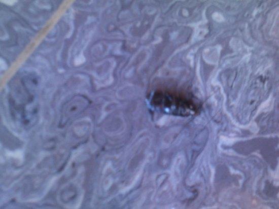 Gotznerhof: Half dead cockroach on dining room floor