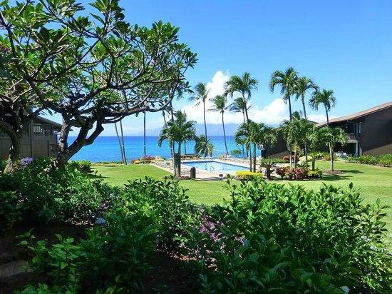 Beautiful Ocean Views ocean front property - beautiful ocean views! - picture of mahina