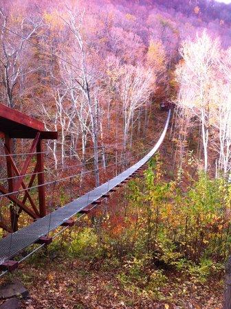 New York Zipline Adventure Tours : Fall is a great season to zipline at Hunter