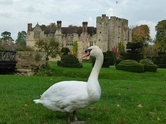 Hever Castle & Gardens: One of the ground's inhabitants