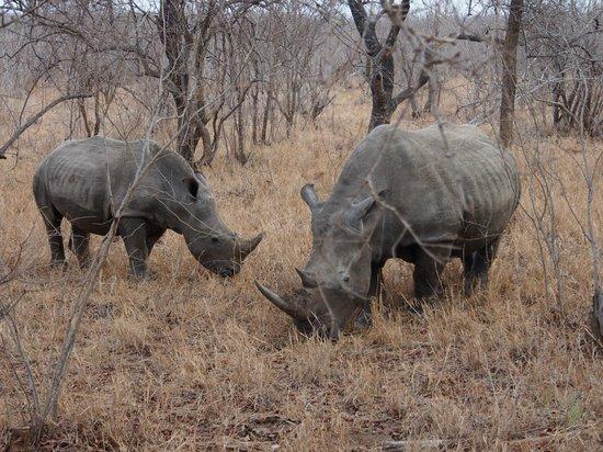 Kapama River Lodge : Rhinos