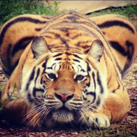 Big Cat Refuge Tyler Texas