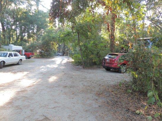 Edisto Beach State Park Campground Edisto Island South Carolina