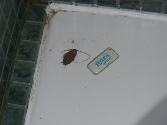 Relaxia Lanzaplaya Apartments: cockroach in shower