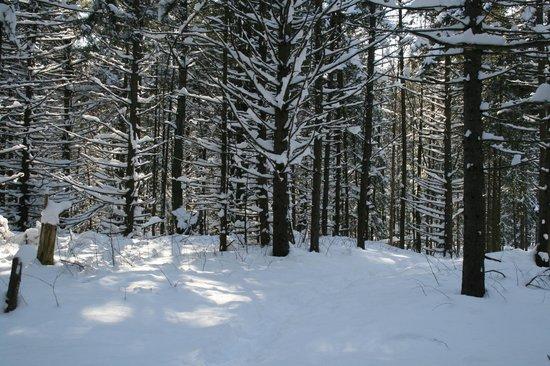 32e93160ee56 Auberge du Joli Vent   115 acres avec sentiers de randonnée (toutes saisons)