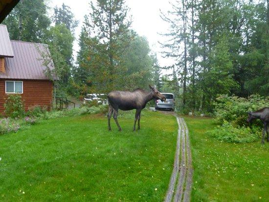 Traleika Mountaintop Cabins: Mamma Moose