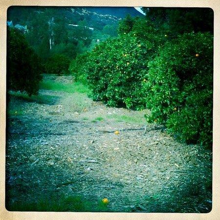 Center for Spiritual Renewal: Orchard walk