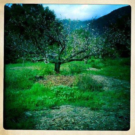 Center for Spiritual Renewal : Orchard
