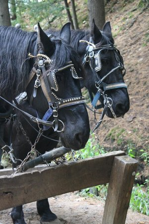 Lost Canyon Tours: Jack and Pete our Percheron team