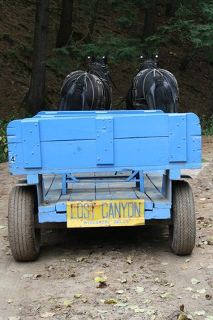Lost Canyon Tours: Jack and Pete pulling the wagon