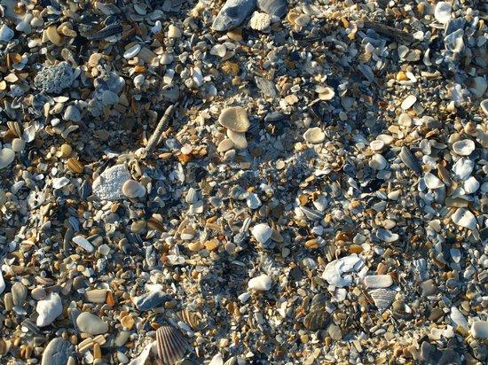 Blockade Runner Beach Resort: Sea shells