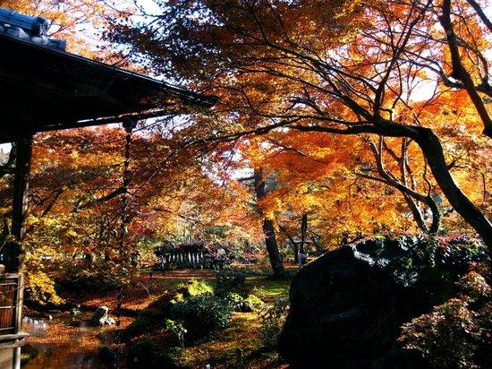 Hogonin Temple: 晩秋の宝厳院  光と陰