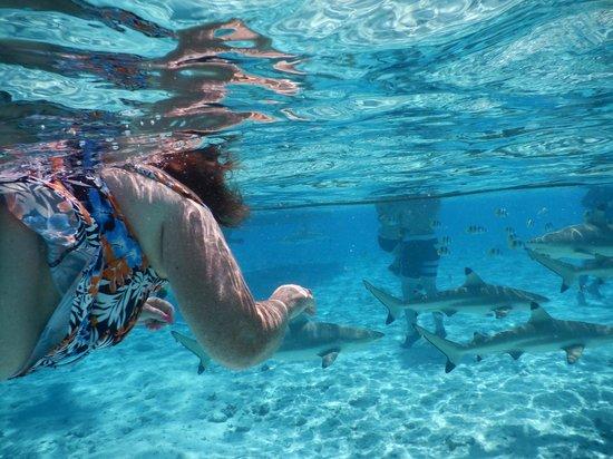 Bora Lagoonarium Snorkeling With Sharks And Rays