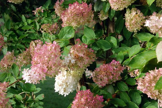 Harbourview Inn: Flowering shrubs in garden