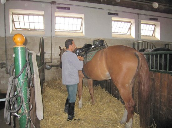 "Hortobagy National Park: 厩舎で馬装するホースマンと私が騎乗した""Zorro"""