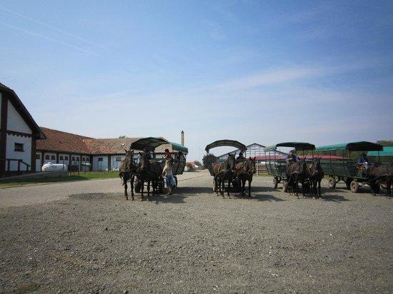 Hortobagy National Park: 客待ちする馬車は、定時に出発します。