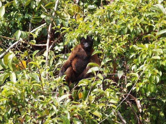 Abundancia Amazon Eco Lodge: monkey