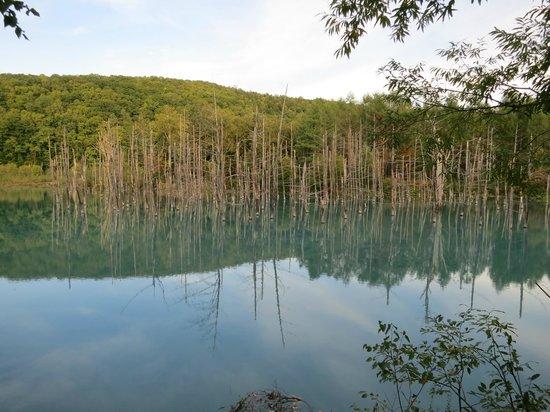 Blue Pond: 歩道からの池の様子