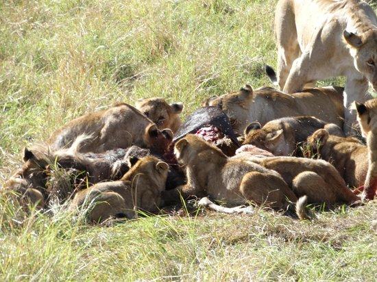 Go Kenya Tours and Safaris: Having a good Breakfast