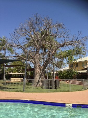 Boab tree in centre courtyard Mercure Broome