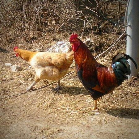 I nostri animali foto di agriturismo camplan asiago for Asiago agriturismo