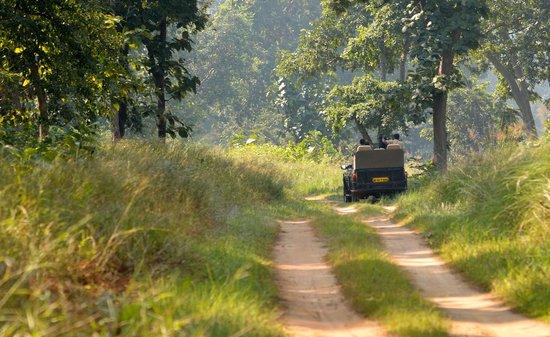 Pashan Garh: On safari