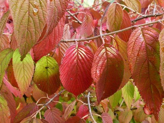 Weingasthof Sabathihof: Herbstfarben