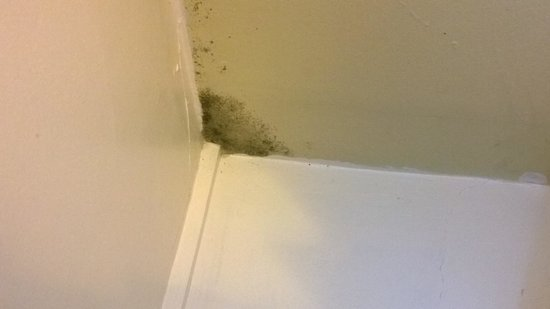 White Horse Inn: one of 4 spots of mold in the room