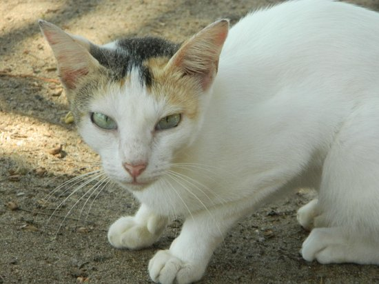 Pozhiyoram Beach Resort: One of the their cute pets