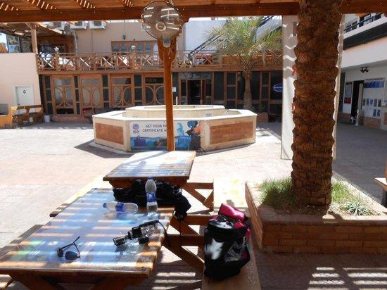 Red Sea Diving College : Read Sea collège
