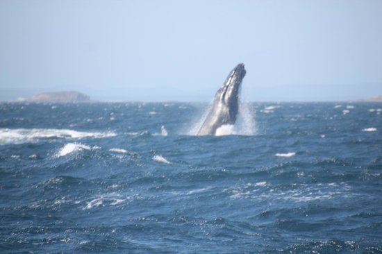 Colourful Trips - Day Tours: mother whale showing its calf how its done