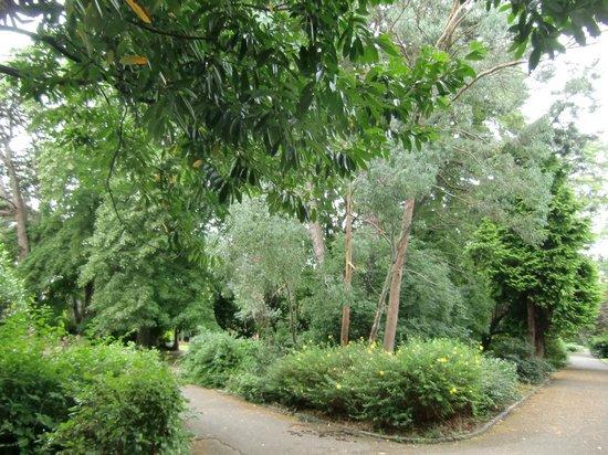 Palmerston Park: particolare del parco