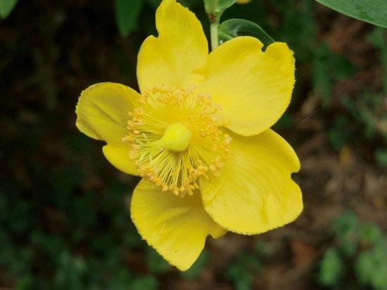 Palmerston Park: fiorellino del parco