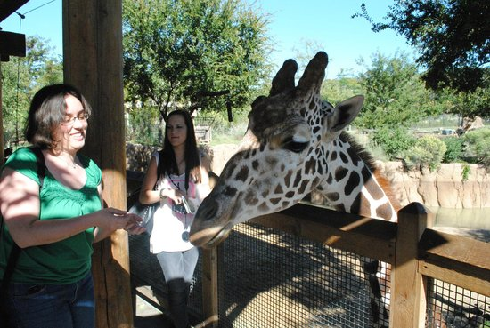 Dallas Zoo : feeding giraffes!!