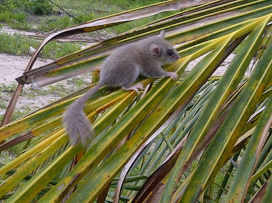 Kilwa Beach Lodge: The coconut plantation has lots of wildlife