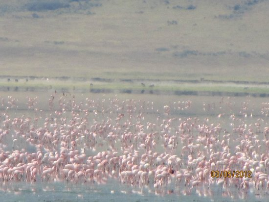 Ngorongoro Serena Safari Lodge: Sea of Pink