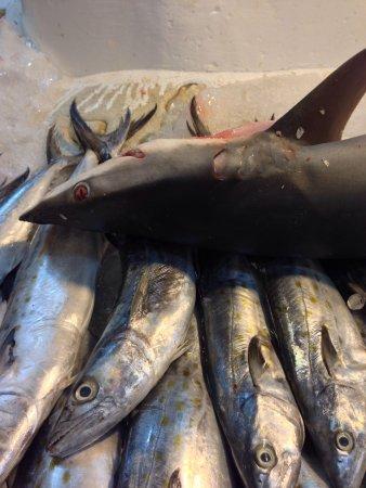 Mercado de San Juan: Shark at the fishmongers of San Juan Market