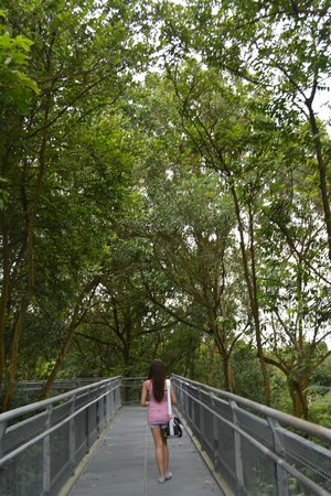 The Southern Ridges: Forest Walk