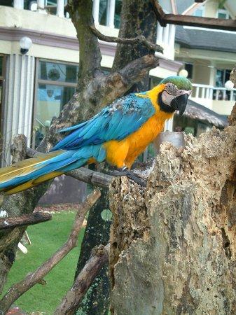 Paradise Bay Beach & Watersport Resort: Местная достопримечательность