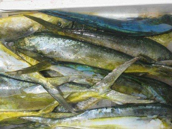 Mixed Bag Sportfishing - Offshore Adventures: MAHI MAHI!!!